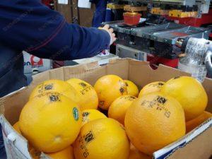 Тампопечать на апельсинах